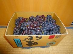 DSC00154_blog.jpg