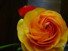 DSC01533_blog.jpg