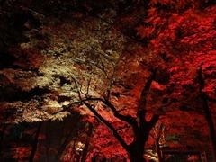 DSC01846_blog.jpg
